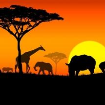 que-ver-en-africa-otros-continentes-min