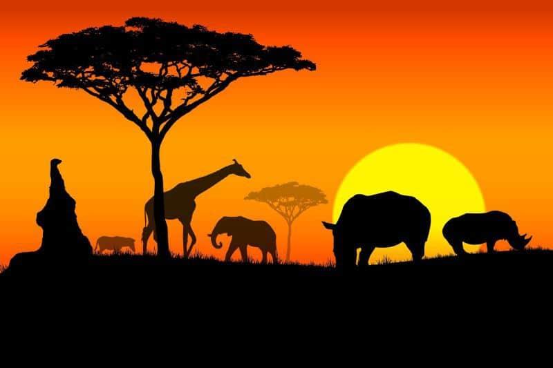 Que cosas ver y hacer en Africa - Visitar lugares y puntos turisticos