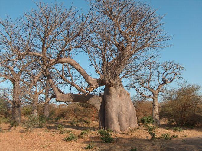 Reserva Natural de Bandia
