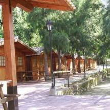 que-ver-en-el-bosque-espana-camping