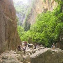 que-ver-en-el-bosque-espana-parque-natural