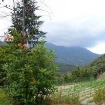 que-ver-en-montseny-espana-casa-rural-els-vimets