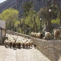 que-ver-en-villaluenga-del-rosario-espana-ruta-trashumante