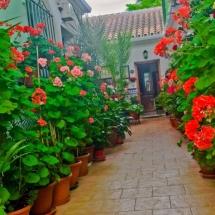 que-ver-en-coin-espana-patios-de-calles-min