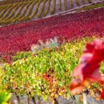 que-ver-en-cariñena-espana-ruta-del-vino-min