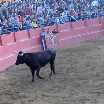 que-ver-en-cariñena-espana-toros-min